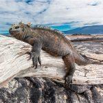 The Galapagos Island